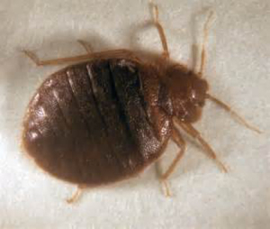 bed bug control huntington beach