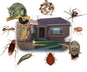 residential pest control huntington beach