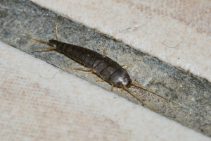 silverfish control huntington beach